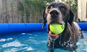 What Are Common Summer Dangers For Dogs