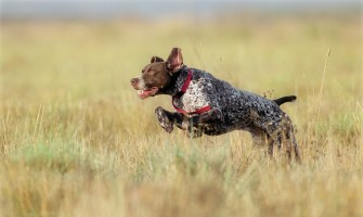 Diet Hunting Dog